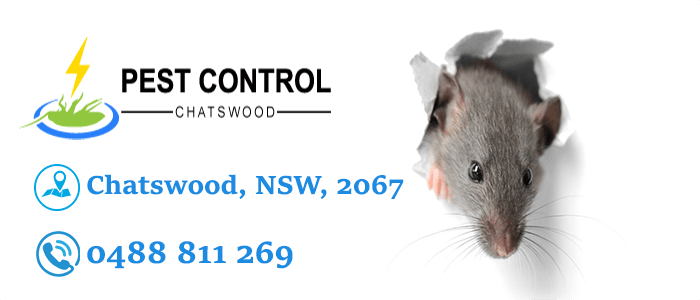 Rodent Control Chatswood